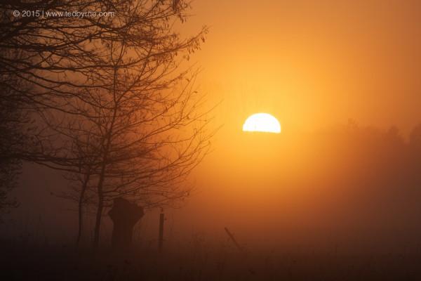 Sunrise through the mist – Le Fanel Reserve, Bern, Switzerland