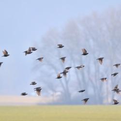 Birds of a Feather - Savagnier, Neuchâtel, Switzerland